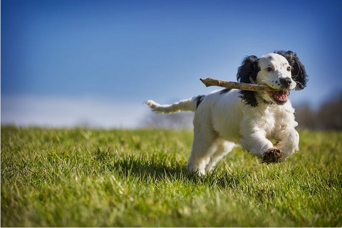 How to take care of your dog with the help of mobile applications